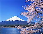 Mt. Fuji From Kawaguchiko, Yamanashi Prefecture, Japan