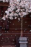Temple et fleurs de la cerise