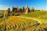 Schloss Ortenberg und Weinberge im Herbst, in der Nähe von Offenburg, Ortenaukreis, Baden-Württemberg, Deutschland