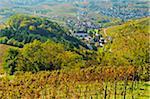 Weinberge im Herbst über dem Dorf Durbach, Ortenau, Schwarzwald, Baden-Württemberg, Deutschland