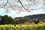 Asuka Village, Nara Prefecture
