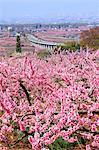 Fuefuki, préfecture de Yamanashi