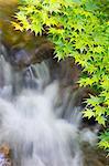 Waterfall and maple leaves in Yonezawa, Yamagata Prefecture