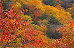 Nishizawa Valley, Yamanashi Prefecture