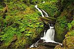 Seasonal creek, Graves Creek area, Olympic National Park, Washington, USA