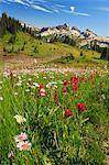 Pré de fleurs alpines d'été, Parc National du Mont Rainier, Washington, USA