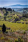 Vue d'ensemble des vignobles, San Gimignano, Province de Sienne, Toscane, Italie