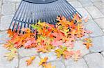 Raking Fallen Oak Tree Leaves from Backyard Stone Pavers Patio in Autumn