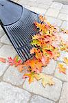 Raking Fallen Oak Tree Leaves from Backyard Stone Pavers Patio in Autumn Vertical