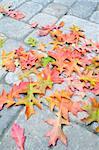 Colorful Fallen Oak Tree Leaves on Backyard Cement Paver Brick Patio Background