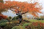 Cette sculpture d'un lanceur de disque dans le parc Vanier et le feuillage complet derrière elle, devancer le brouillard surgit en arrière-plan.