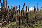 Parc national signe et cactus, Parc National Arikok, Aruba, petites Antilles, des Caraïbes