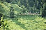 Vaches marchant le long de la colline herbeuse