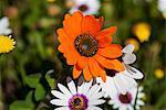 Gros plan de fleurs orange vif
