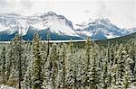 Verschneite Bäume, Banff, Alberta, Kanada
