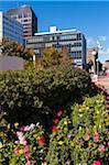 Flower Bed in Downtown Halifax, Nova Scotia, Canada