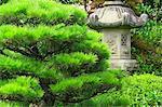 Pine tree and stone lantern, Nara Prefecture