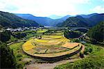 Farmland in Aridagawa, Wakayama Prefecture