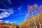 Autumn leaves, Mount Norikura and blue sky in Matsumoto, Nagano Prefecture