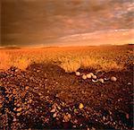 Ostrich Eggs in Landscape Damaraland, Namibia