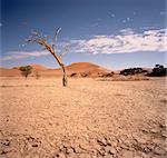 Desert Sossusvlei, Namib Desert Namibia