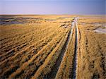 Road through Field Makgadikgadi Pans, Botswana Africa