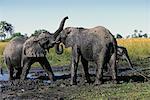 Éléphants jouant au trou d'eau Okavango Delta, Botswana