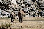 Vue arrière de l'Afrique d'éléphants africains