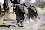 Vue arrière des éléphants d'Afrique Afrique en cours d'exécution