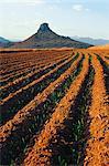 North Eastern Freestate, Afrique du Sud
