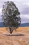 Flock of Sheep Under Tree