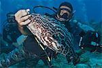 Diver holding black grouper (Mycteroperca bonaci)), Roatan, Bay Islands, Honduras, Caribbean, Central America