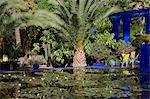 Tropische Palmen rund um eine dekorative Teich mit Wasser Lilien im Garten Majorelle in Marrakesch, Marokko, Nordafrika, Afrika