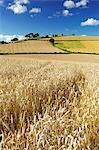 Summer Fields, Thorverton, Devon, England, United Kingdom, Europe