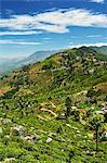 View of tea plantations from Lipton's Seat, Haputale, Sri Lanka, Asia
