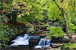 TAF Fechan rivière qui coule à travers de feuillage d'automne, Parc National de Brecon Beacons, Powys, pays de Galles, Royaume-Uni, Europe