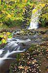 Feuillage de chute d'eau et à l'automne à Blaen-y-Glyn, Parc National de Brecon Breacons, Powys, pays de Galles, Royaume-Uni, Europe