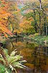 Beautiful autumnal colours line the banks of the River Teign at Fingle Bridge, Dartmoor National Park, Devon, England, United Kingdom, Europe