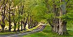 Chemin de campagne sinueuses à travers les hêtres, près de Wimborne, Dorset, Angleterre, Royaume-Uni, Europe