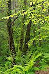 Forêts verdoyantes dans mid Devon, Angleterre, Royaume-Uni, Europe
