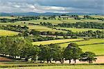 Laminage des terres en été, évêque de Gex, Devon, Angleterre, Royaume-Uni, Europe