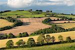Campagne vallonnée en été, près de Crediton, Devon, Angleterre, Royaume-Uni, Europe