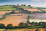 Rolling countryside on a misty morning, mid Devon, England, United Kingdom, Europe
