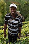 Farmer Lincoln Kimanthi Mugo picking tea, Kathangiri, Kenya, East Africa, Africa