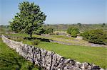 Dry stone walls, Hartington, Peak District, Derbyshire, England, United Kingdom, Europe