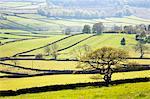 Wharfedale near Appletreewick, Yorkshire Dales, Yorkshire, England, United Kingdom, Europe