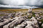 Revêtement de calcaire et permanent de la pierre, Twistelon Scar, Yorkshire Dales, North Yorkshire, Yorkshire, Angleterre, Royaume-Uni, Europe
