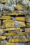 Lichen sur les rochers, Broch de Mousa. Mousa Island, l'île Shetland, Ecosse, Royaume-Uni, Europe