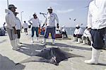 Mobula péruvienne prises dans la pêche artisanale dirigée de multi au Pérou, les pêches sont bien financés par le gouvernement péruvien, le Pérou, Amérique du Sud