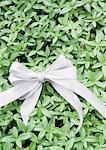 Ribbon on leaves
